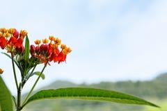 Fiori rossi dell'erba nell'inverno Immagini Stock
