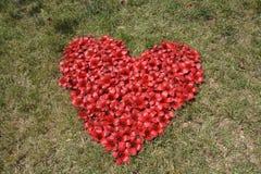 Fiori rossi della fromager nella forma del cuore Fotografia Stock