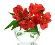 Fiori rossi di Alstroemeria in vaso Immagine Stock Libera da Diritti