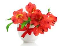 Fiori rossi di Alstroemeria in vaso Immagine Stock