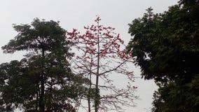 Fiori rossi di marzo Fotografie Stock Libere da Diritti