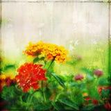 Fiori rossi e gialli sul fondo di lerciume Fotografia Stock