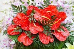 Fiori rossi e viola Fiori artificiali Fotografia Stock