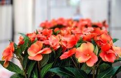 Fiori rossi ed arancio artificiali, fuoco molle Fotografia Stock Libera da Diritti