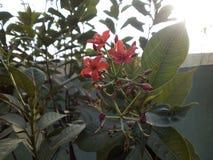 Fiori rossi & foglie verdi fotografia stock libera da diritti