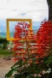 Fiori rossi naturali sui precedenti del telaio Sabah, Borneo, Malesia fotografia stock