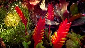 fiori rossi nel campo Immagine Stock