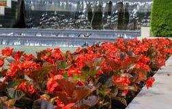 Fiori rossi nel giardino fotografia stock libera da diritti