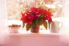 Fiori rossi, stella di Natale e una brocca sul davanzale Fotografia Stock Libera da Diritti