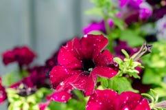 Fiori rossi sul letto verde fotografia stock