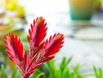 Fiori rossi sulla natura Immagini Stock Libere da Diritti
