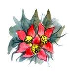 Fiori rossi verniciati in acquerello Immagini Stock