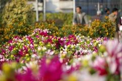 fiori Rosso-bianchi Fotografie Stock Libere da Diritti