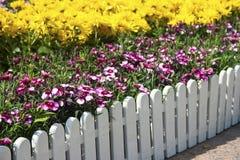 fiori Rosso-e-bianchi Fotografie Stock
