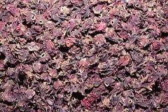 Fiori secchi di rosella Immagini Stock