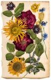 Fiori secchi sullo strato di carta invecchiato Lavanda, rose, girasoli Fotografia Stock Libera da Diritti