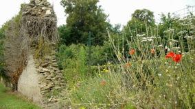 Fiori selvaggi al castello di Canon, Francia video d archivio