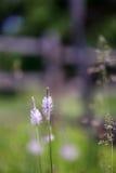 Fiori selvaggi che fioriscono nel prato erboso verde alla scena rurale del ranch Fotografia Stock Libera da Diritti