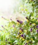 Fiori selvaggi con il bordo del sole Fotografia Stock