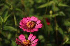Fiori selvaggi con un'ape Fotografia Stock Libera da Diritti
