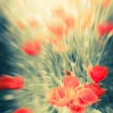 Fiori selvaggi del papavero sul prato di estate Acquerello della sfuocatura che dipinge e Fotografie Stock Libere da Diritti