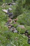 Fiori selvaggi della montagna Immagini Stock Libere da Diritti