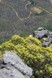 Fiori selvaggi della montagna della Tabella Fotografie Stock Libere da Diritti