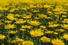 Fiori selvaggi di fioritura Colourful in un prato idilliaco di tempo di molla Immagine Stock