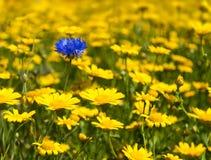 Fiori selvaggi di fioritura Colourful in un prato idilliaco di tempo di molla Fotografie Stock