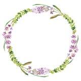 Fiori selvaggi e corona dell'acquerello della lavanda illustrazione di stock