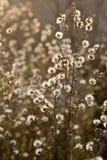 Fiori selvaggi e fauna Fotografie Stock