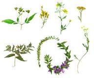 Fiori selvaggi e piante Fotografia Stock