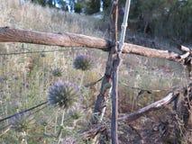 Fiori selvaggi e recinto rurale Immagini Stock Libere da Diritti