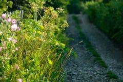 Fiori selvaggi ed erba alta lungo la strada campestre vaga Fotografia Stock