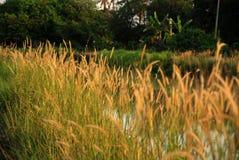 Fiori selvaggi, fiume, mattina Fotografia Stock