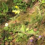 Fiori selvaggi nell'erba immagine stock libera da diritti