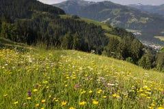 Fiori selvaggi nelle alpi tedesche Fotografia Stock