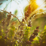 Fiori selvaggi sul prato Fotografia Stock