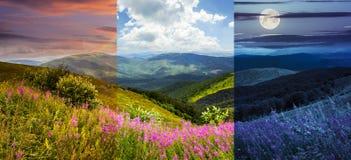 Fiori selvaggi sulla cima della montagna Immagini Stock