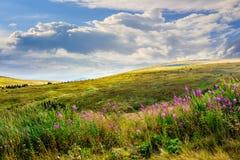 Fiori selvaggi sulla cima della montagna Fotografia Stock Libera da Diritti