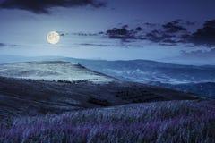 Fiori selvaggi sulla collina della montagna alla notte Immagine Stock Libera da Diritti