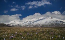 Fiori selvaggi sulla montagna di Vettore al parco nazionale di Monti Sibillini Fotografia Stock