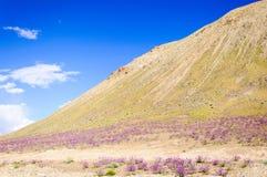 Fiori selvaggi sulle montagne sul modo a Lamayuru Fotografia Stock Libera da Diritti
