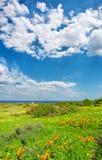 Fiori selvaggi vicino al mare sotto i cieli drammatici Fotografia Stock