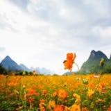 Fiori selvaggi in Yangshuo Cina immagini stock