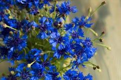 Fiori soleggiati molto carini di mosconi azzurri della carne immagini stock