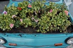 Fiori sotto il cappuccio di un'automobile fotografia stock libera da diritti