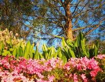Fiori sotto l'albero Fotografia Stock Libera da Diritti