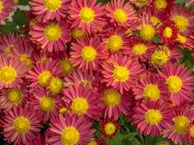 Fiori stagionali gialli rosa in mazzo fotografie stock libere da diritti