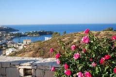 Fiori su Creta Fotografie Stock